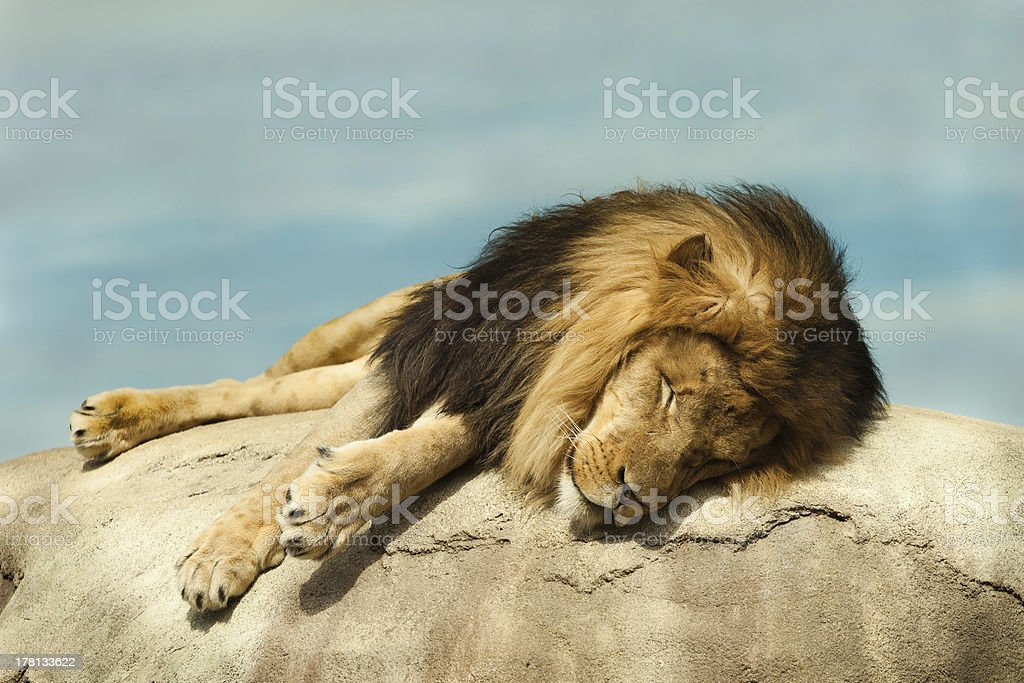 Tired King stock photo