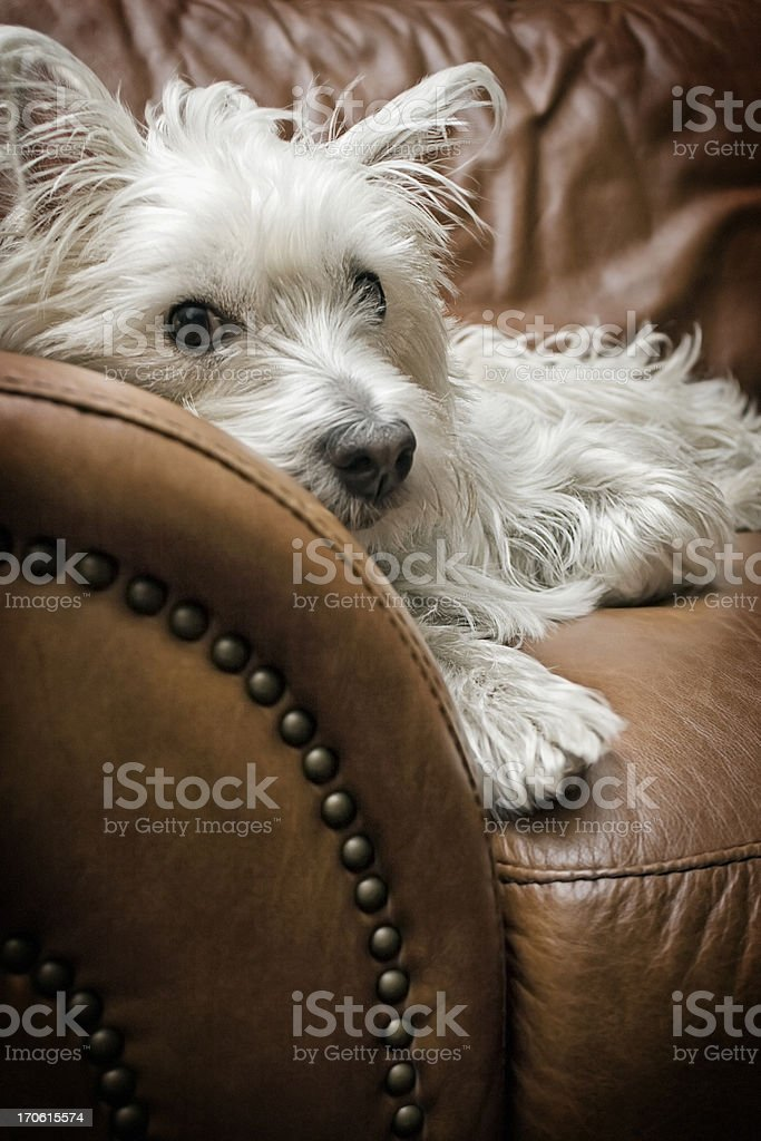 Tired Puppy stock photo