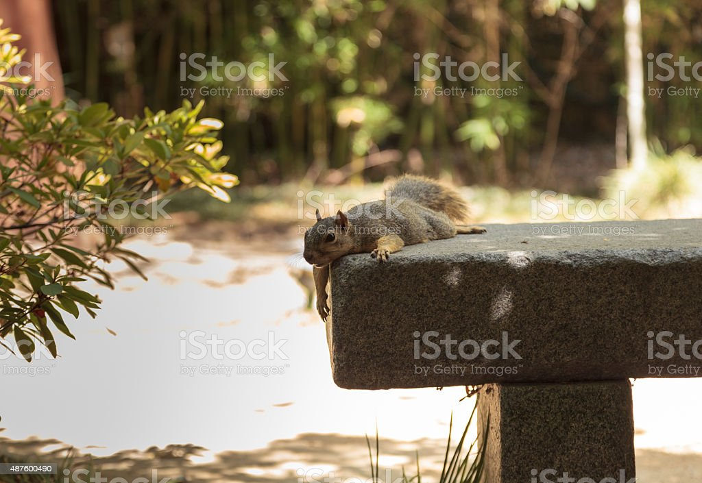 Tired squirrel takes a rest stock photo