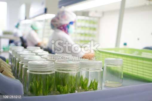 Tissue culture is the growth of tissues or cells separate from the organism. This is typically facilitated via use of a liquid, semi-solid, or solid growth medium, such as broth or agar.