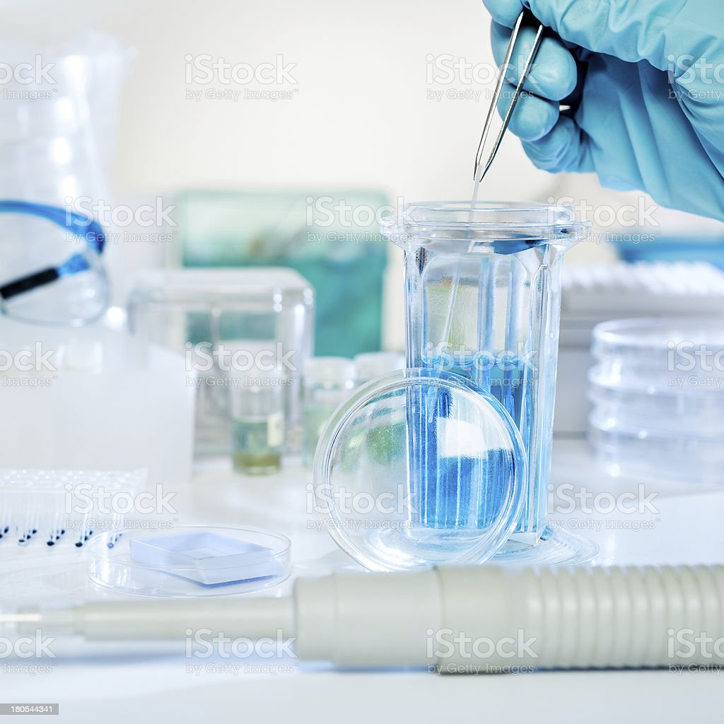 Tissue staining procedure stock photo