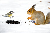 squirrel and the bird share a meal