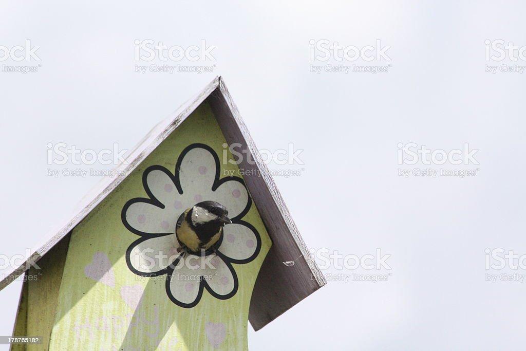 Tit, Bird, Spring, Birdhouse royalty-free stock photo