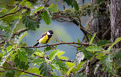 Tit bird sitting on a branch