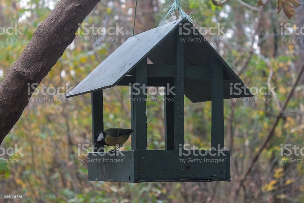 Titmouse sitting on a feeding trough hanging stock photo
