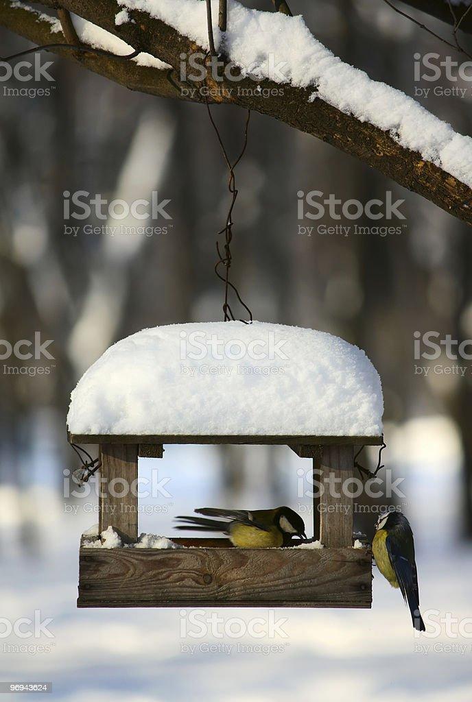Titmouses near the feeder royalty-free stock photo