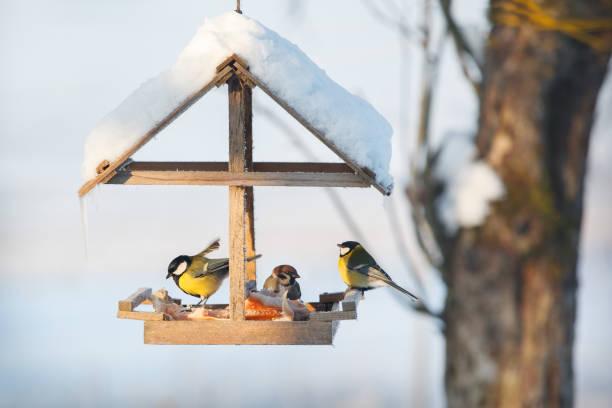tieten in de besneeuwde winter vogelhuis/waterbak - ornithologie stockfoto's en -beelden