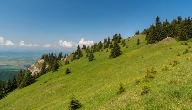 슬로바키아 의 벨카 파트라 산맥의 tlsta 언덕 - 벨리카 파트라 뉴스 사진 이미지