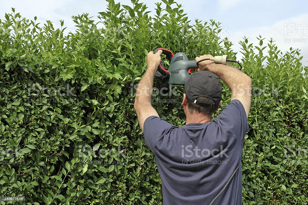 To clip a hedge, gardening stock photo