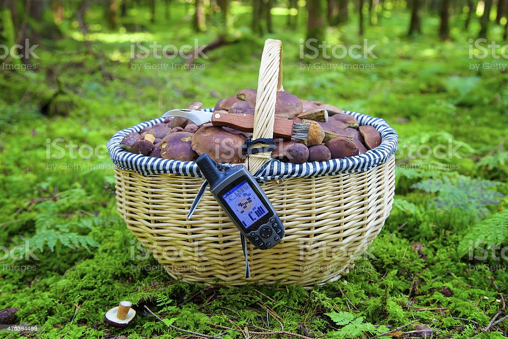 To Collect Mushrooms with GPS royalty-free stock photo