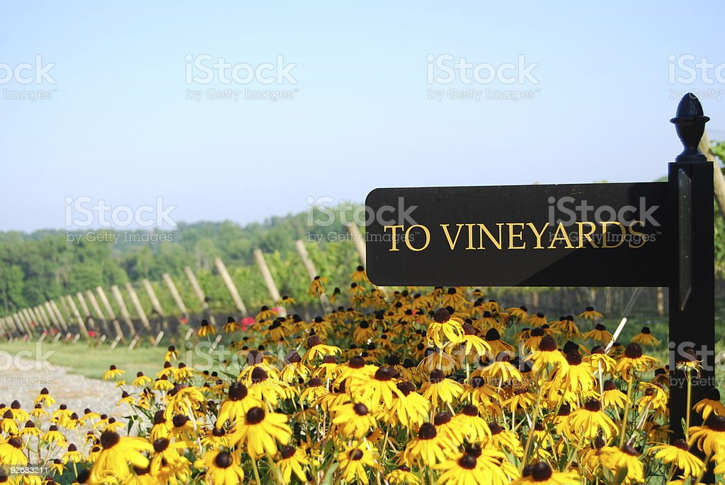 To the Vineyard royalty-free stock photo