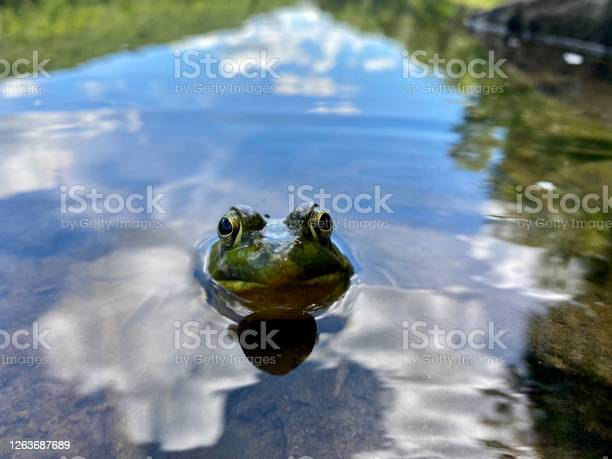 Photo of Toad in a pond