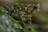 istock Toad in woods 1250695707