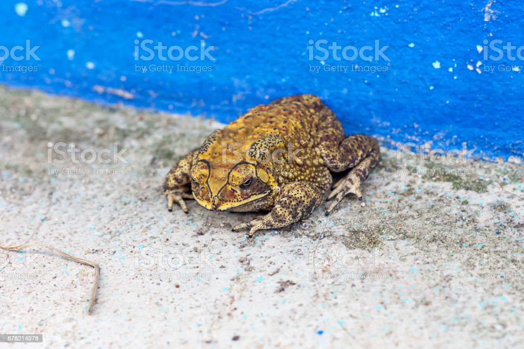 Toad on the cement floor stock photo