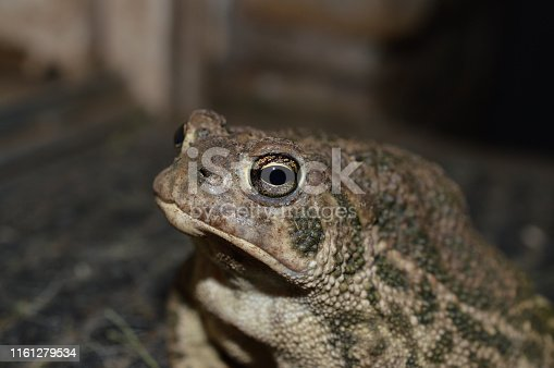 close up of toad's face