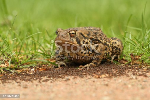 macro shot of a toad on colony of ants - concept in mind was