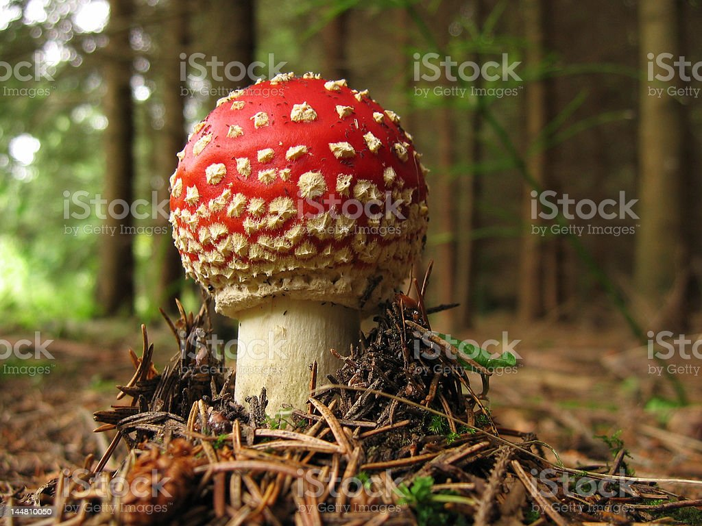 Toadstool baby royalty-free stock photo