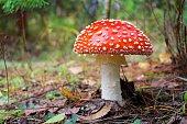 Mushrooms series