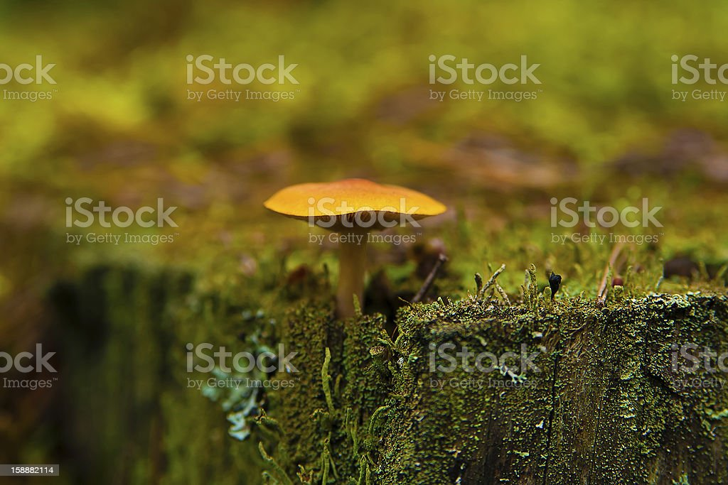toadstool stock photo
