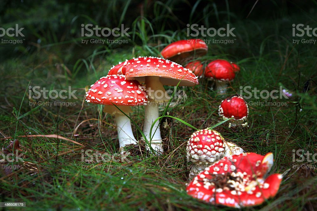 Toadstools in the dark scary woods. stock photo