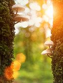 Toadstools on mossy tree trunks