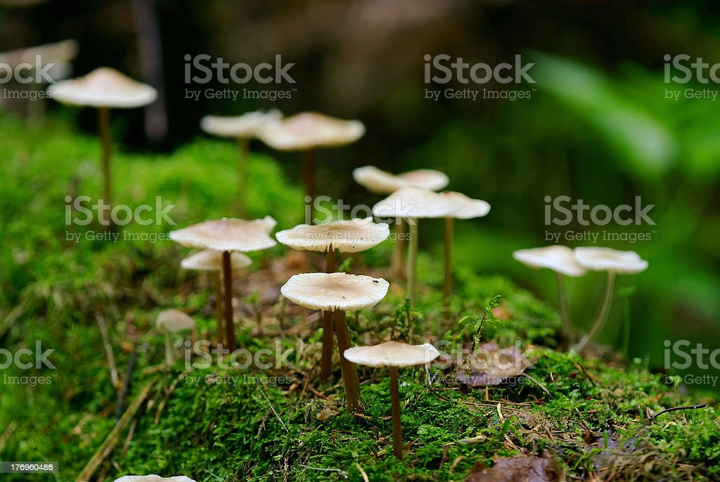 toadstools on trunk of tree royalty-free stock photo