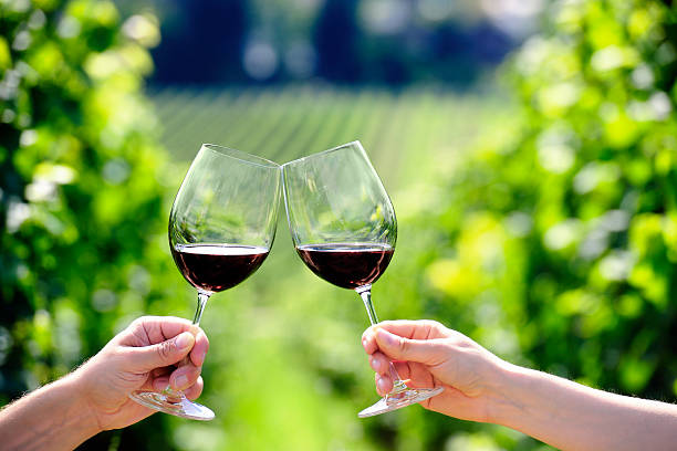 Toasting with two glasses of red wine in the vineyard stock photo