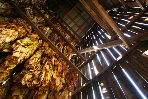 Tobacco Barn, Looking Up 01