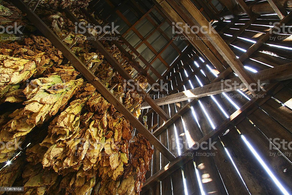 Tobacco Barn, Looking Up 01 stock photo