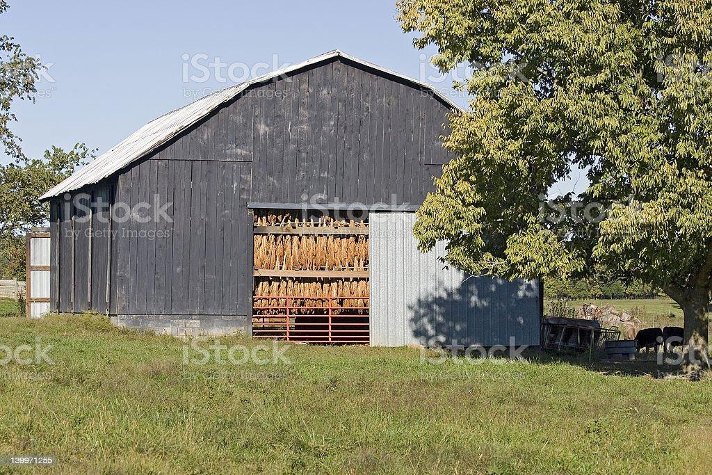 Tobacco Drying Barn royalty-free stock photo