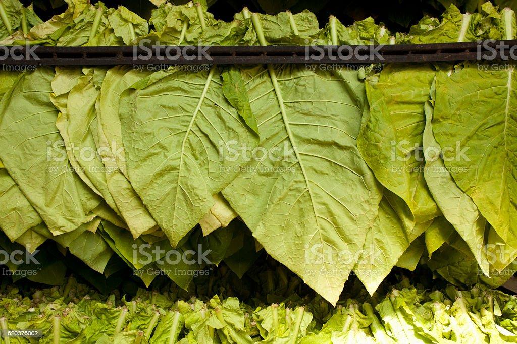 Suszarka liści tytoniu tradycyjne zbiór zdjęć royalty-free