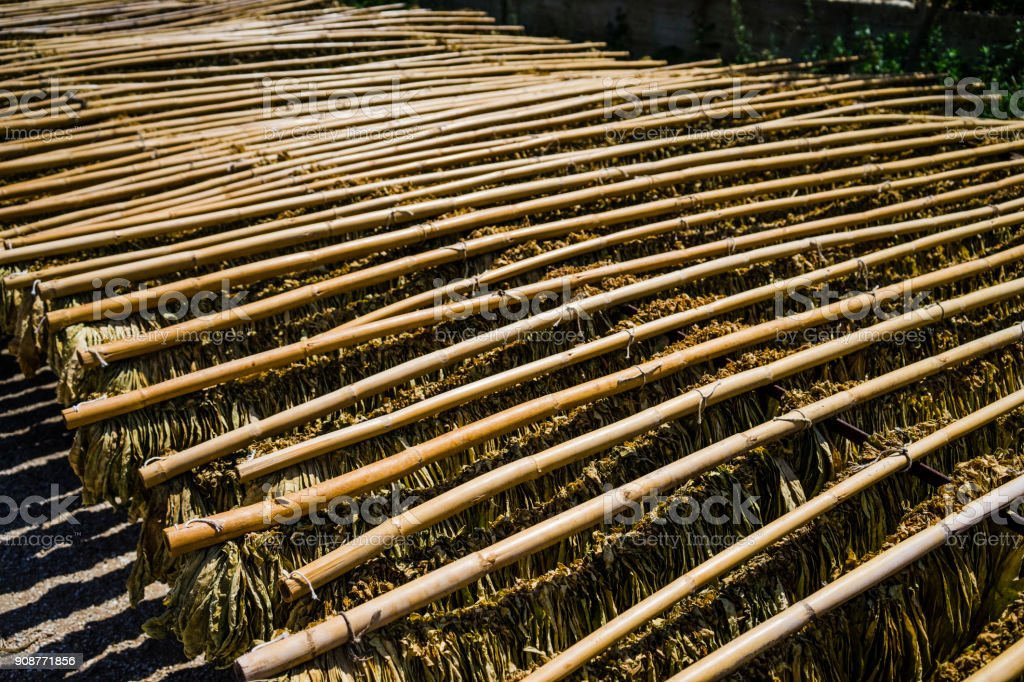 Tobacco leaves drying in the shed, Kula/Turkey stock photo