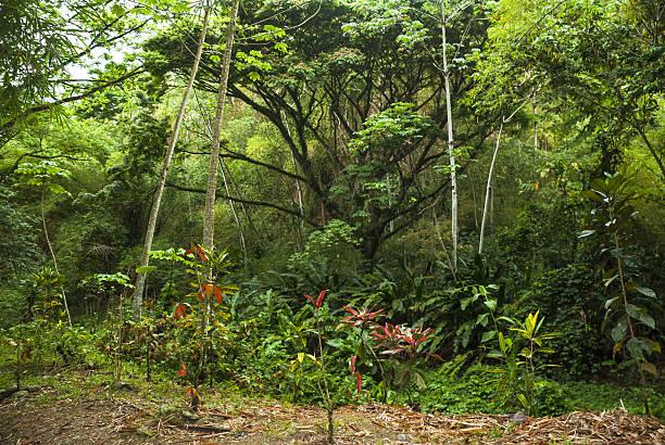 tobago rainforest - réserve naturelle photos et images de collection