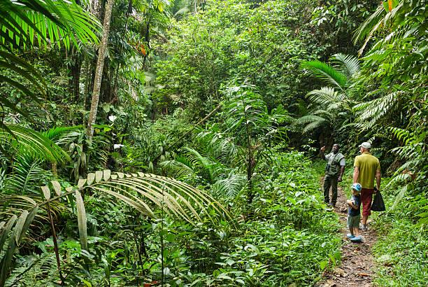Tobago rainforest stock photo