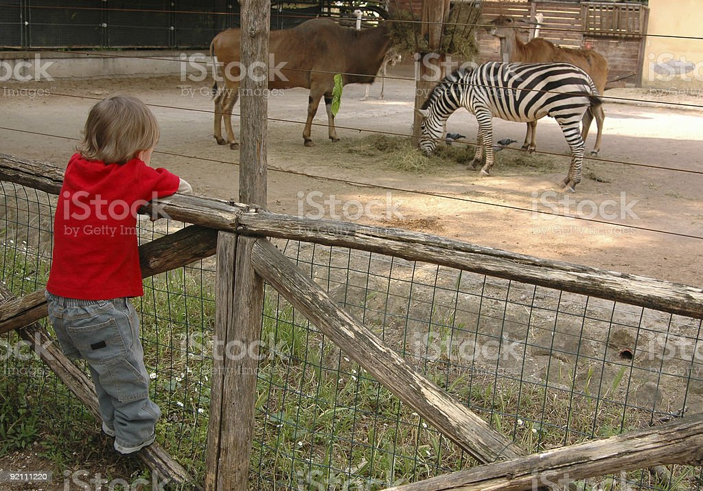 Toddler at the Zoo royalty-free stock photo
