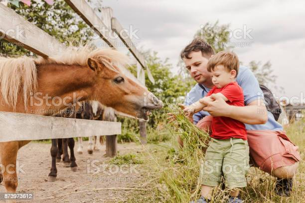Toddler boy and his father feeding a pony at farm picture id873973612?b=1&k=6&m=873973612&s=612x612&h=ng1oetiqdpxv3untik4tsyoayitrqy877umd4veymni=
