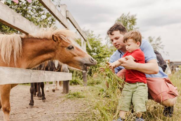 Bebê menino e seu pai alimentando um pônei na fazenda - foto de acervo