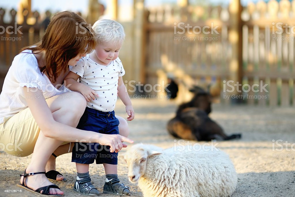 Toddler boy and his mother looking at sheep - Royalty-free 12-17 Months Stock Photo