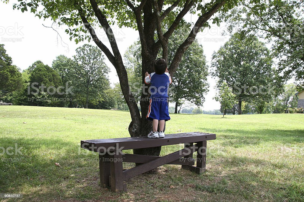 Toddler Boy and Tree royalty-free stock photo