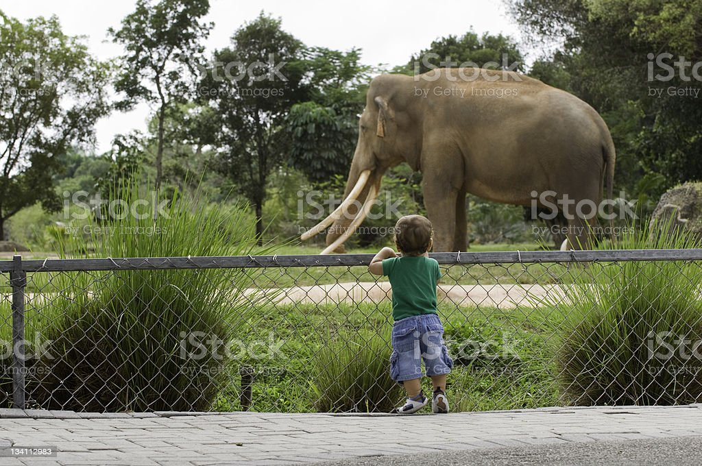Toddler boy at zoo watching elephant stock photo