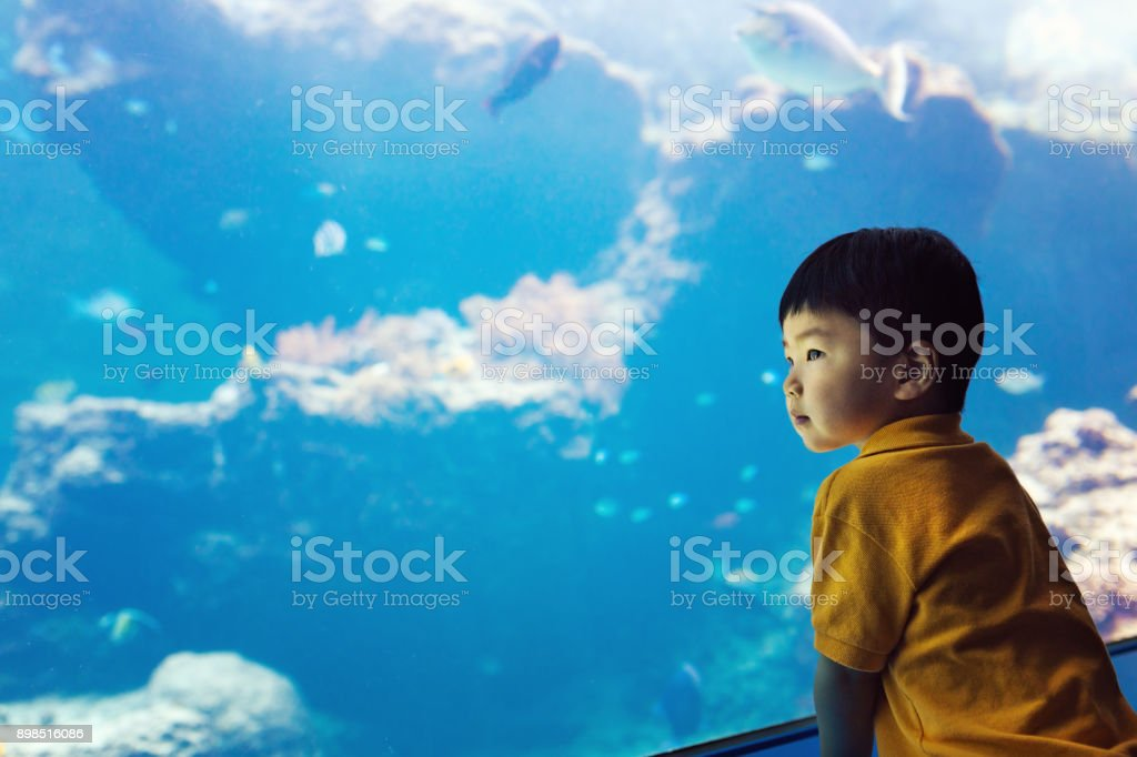 Toddler boy watches fishes royalty-free stock photo