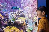 Aquarium, Laughing, Looking, Watching, Asia