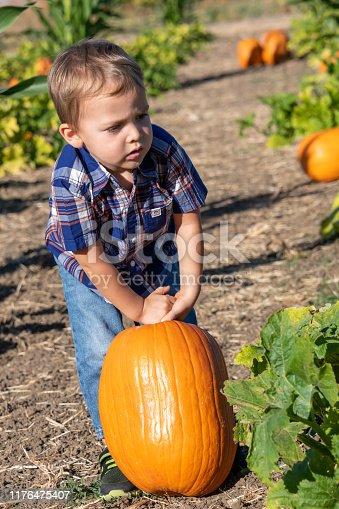 Caucasian toddler child boy picking up a pumpkin