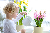 Toddler girl watering spring flowers at home