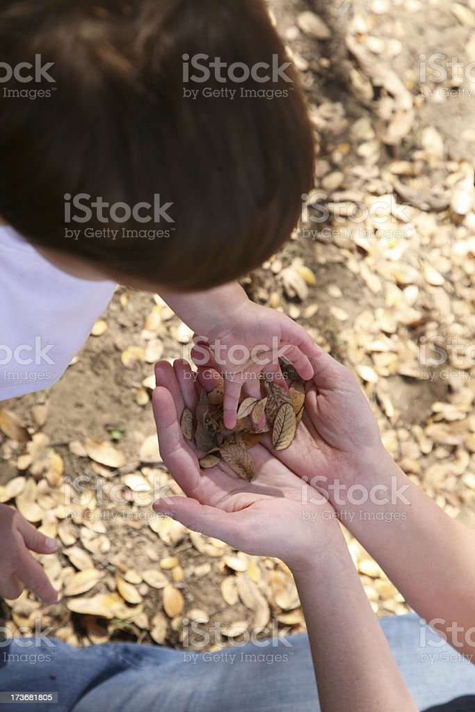 Toddler Handing His Mom Some Leaves royalty-free stock photo