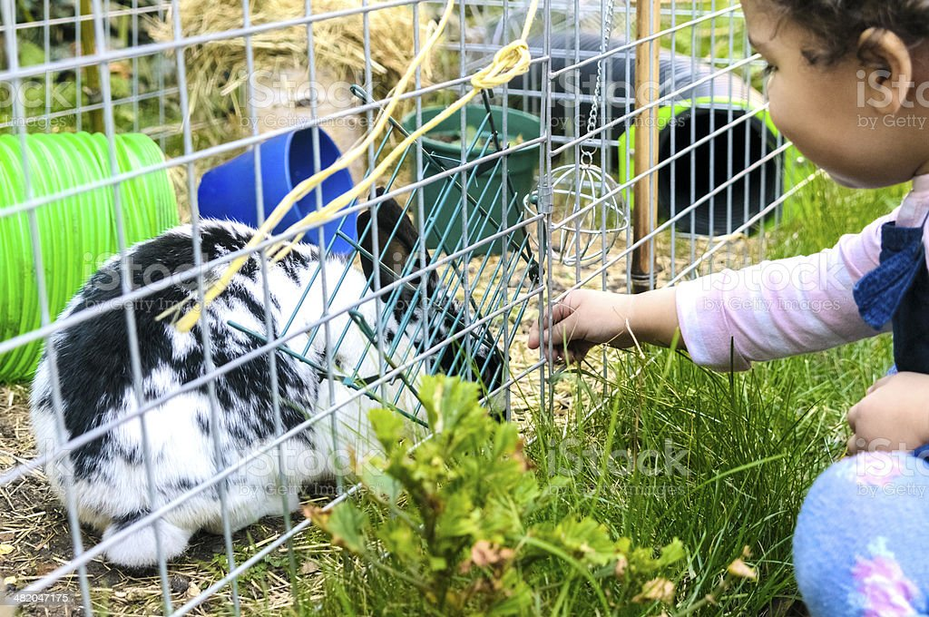 PEOPLE: Toddler is Feeding A rabbit. royalty-free stock photo