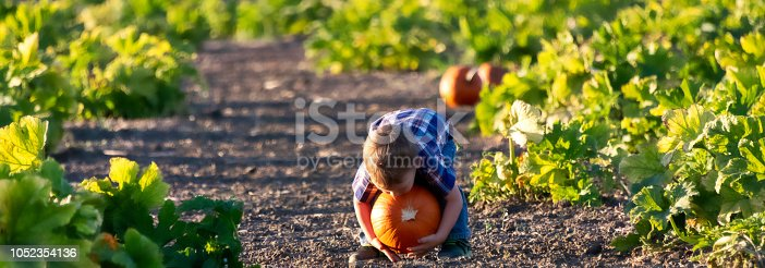 Toddler picking up a pumpkin