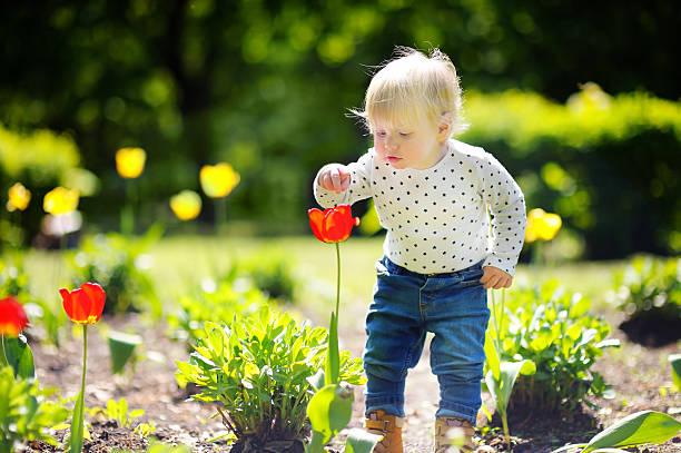 toddler smelling red tulip in the garden - summer smell bildbanksfoton och bilder