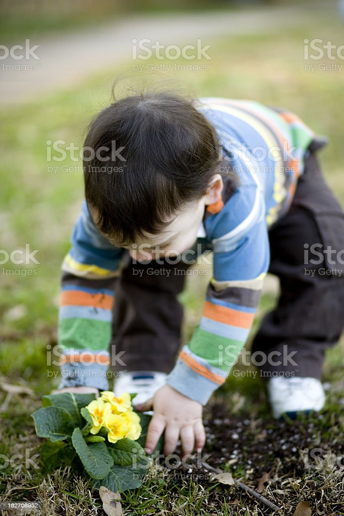 Toddler with Flowers royalty-free stock photo