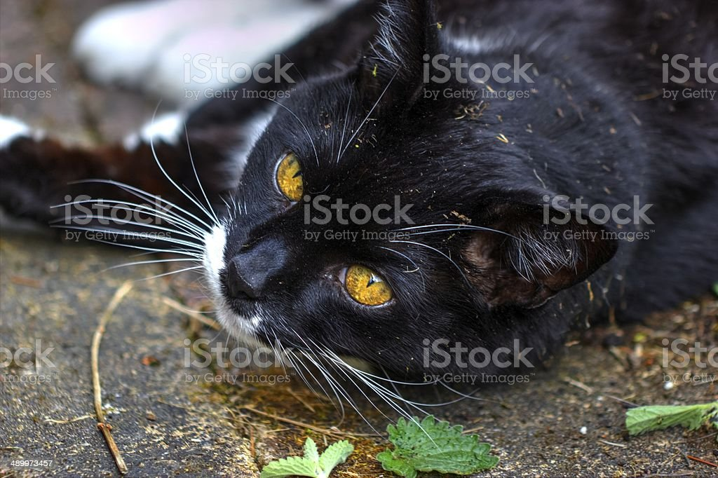 Toddy getting stoned. stock photo